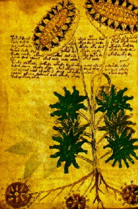 Plants of Unknown Origin~Voynich Manuscript