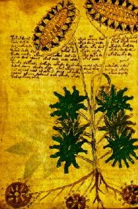 Plants of Unknown Origin~Voynich Manuscript