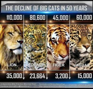 Trophy Hunting Is Not Conservation